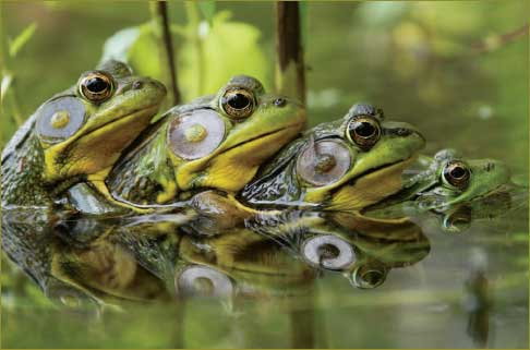 Frogs that comes out of the Abyss multiply very fast. In the Charismatic Churches it multiplies by «soaking».