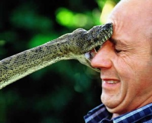 A snake bites the face of a man. Just like the serpent in the garden, Benny Hinn and Creflo Dollar come to you with a copy-cat Jesus.