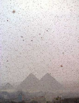 This is locusts attacking Cairo in 2004.