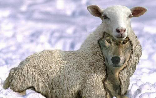 "Too many of these ""shepherds"" have reached leading offices in Christian fellowships."