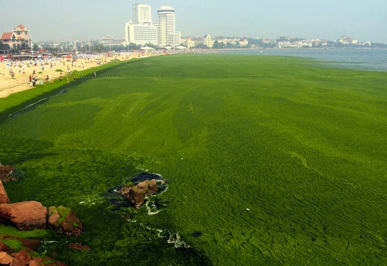 It might not be greener on the other side of the Yellow Sea, for the polluting Chinese industry.