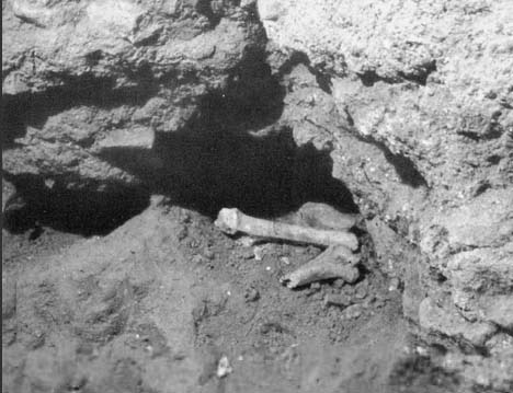 These are bones of the Jewish Apostle Peter, at the site were they where found in 1942.