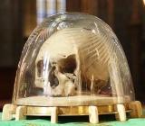 The Holy skull ofAdalbert