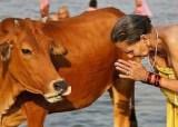 Criminalization of beef inMumbai