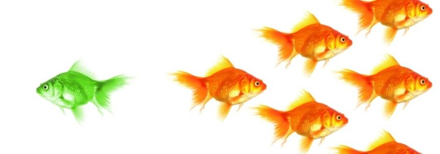 Fish0